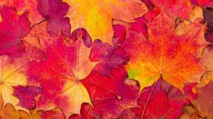 Autumn Performances